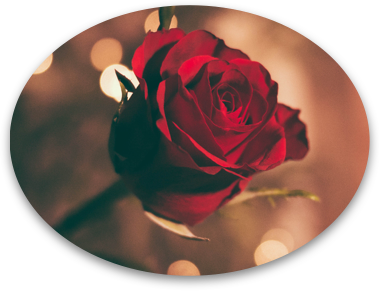 Red-Rose-Lucky.png